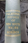 PALAEOZOIC FOSSILS OF NEW SOUTH WALES